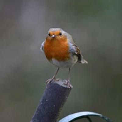 Wild Bird Surveys and Mitigation